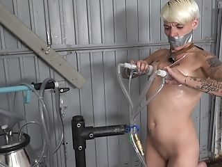 Unwrapping, Prostate Play, Tugjob